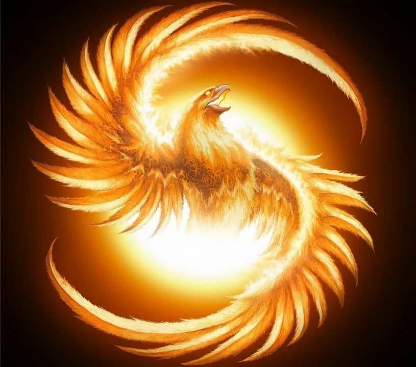 Огненная птица феникс картинка