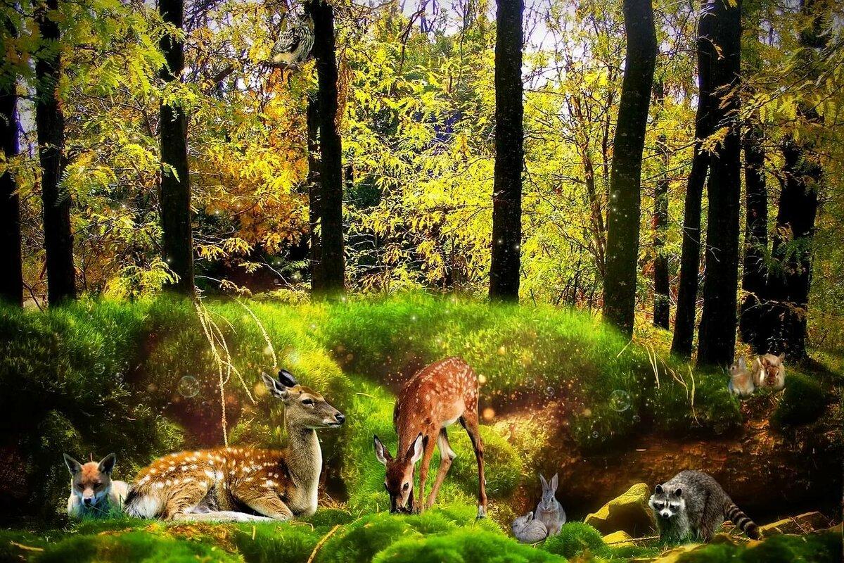 Занимательные картинки о лесе