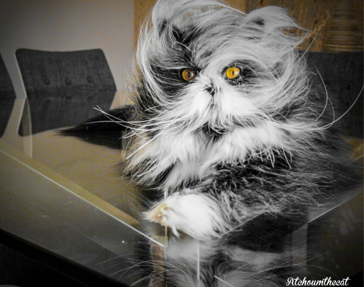 можем картинки самых необычных кошек проработал этой