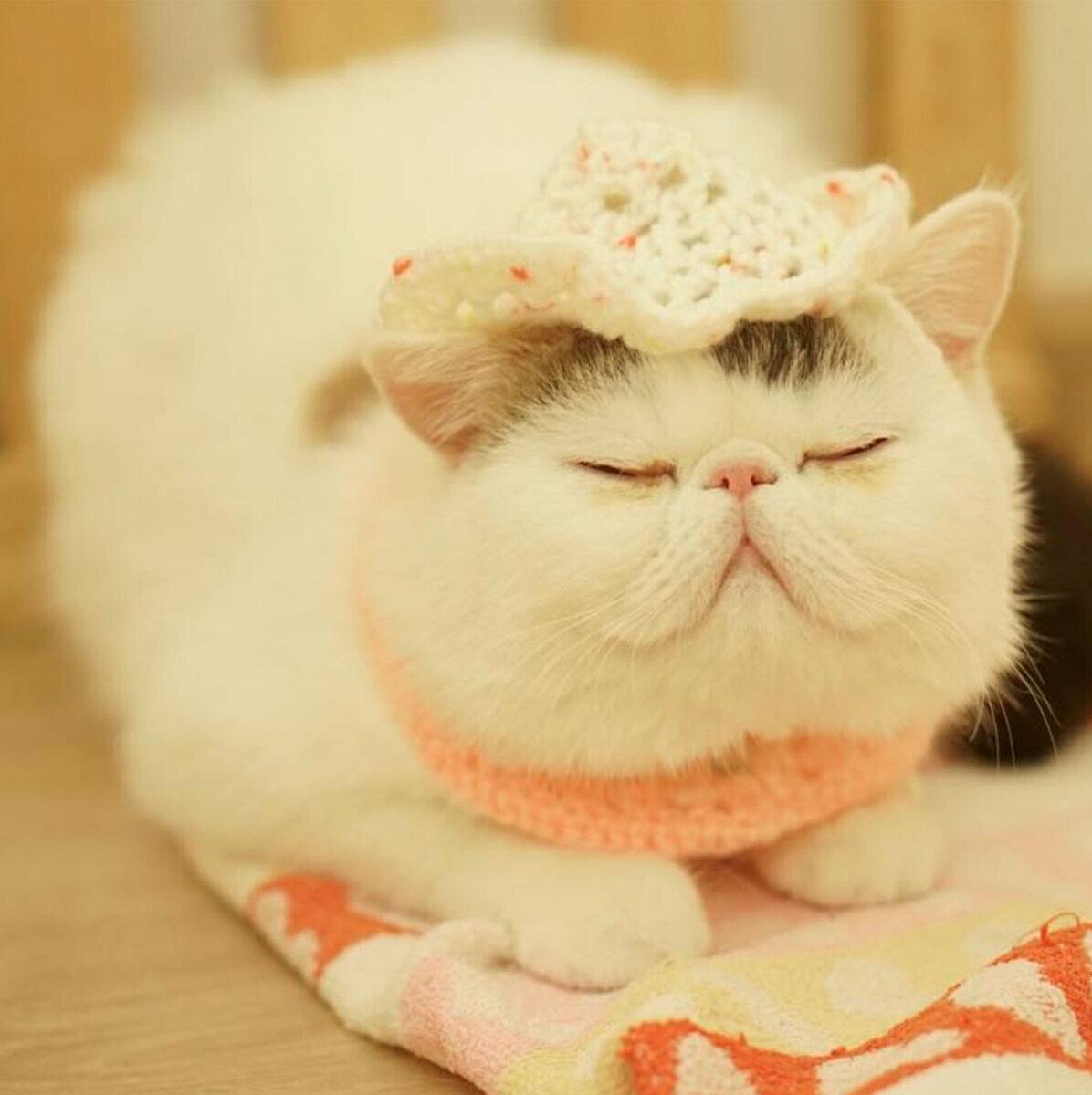 Картинки кошка милашка
