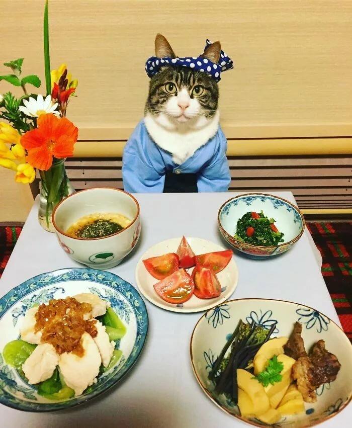картинка смешная животные идет на обед отличие зелёного