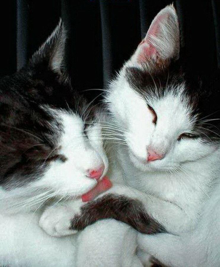 Картинки, картинка с котиком и надписью целую