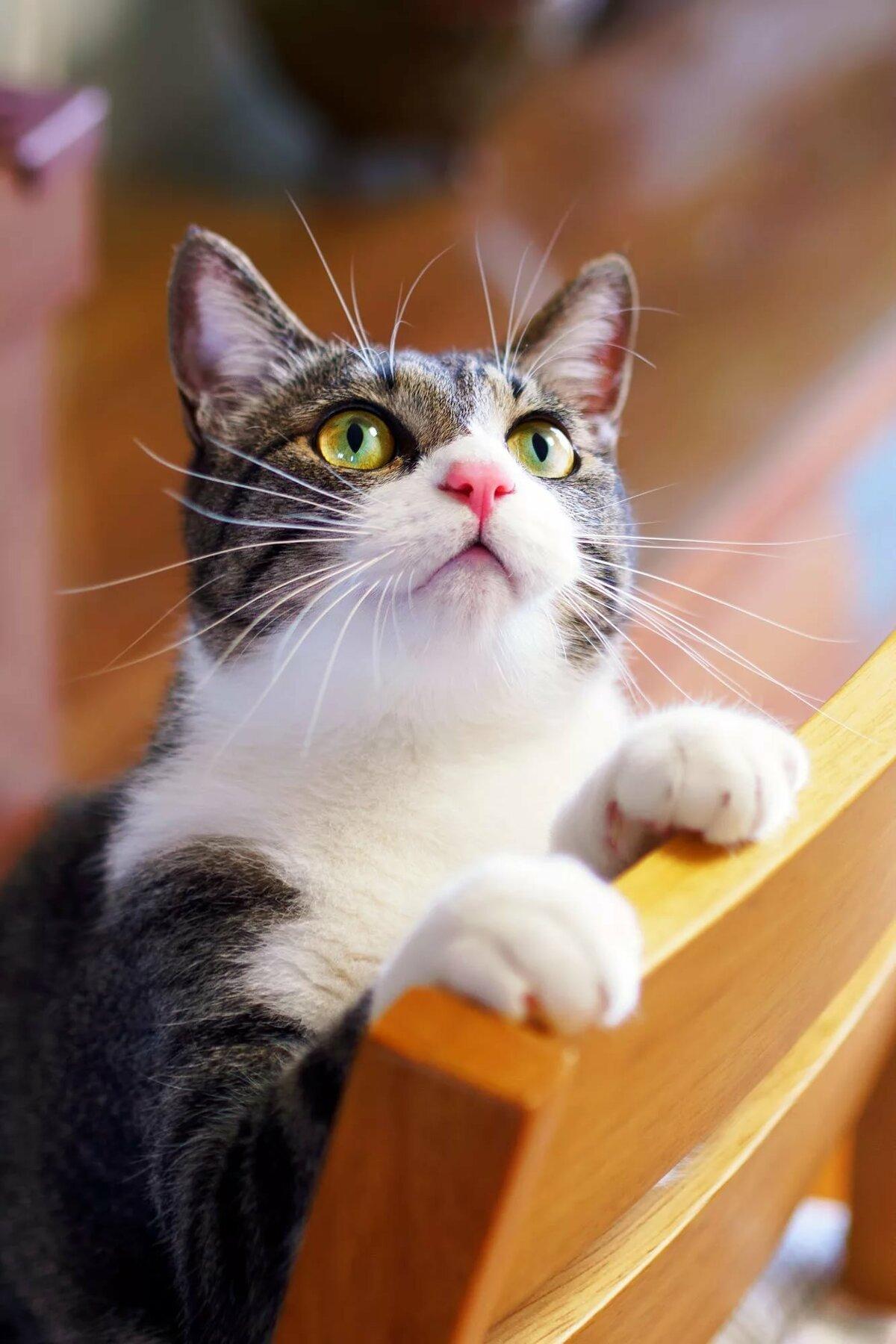 картинки котят которые смотрят вверх длинной веренице