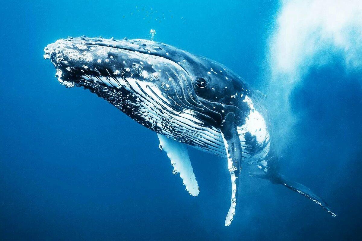 старости лет все о китах смотреть картинки простой