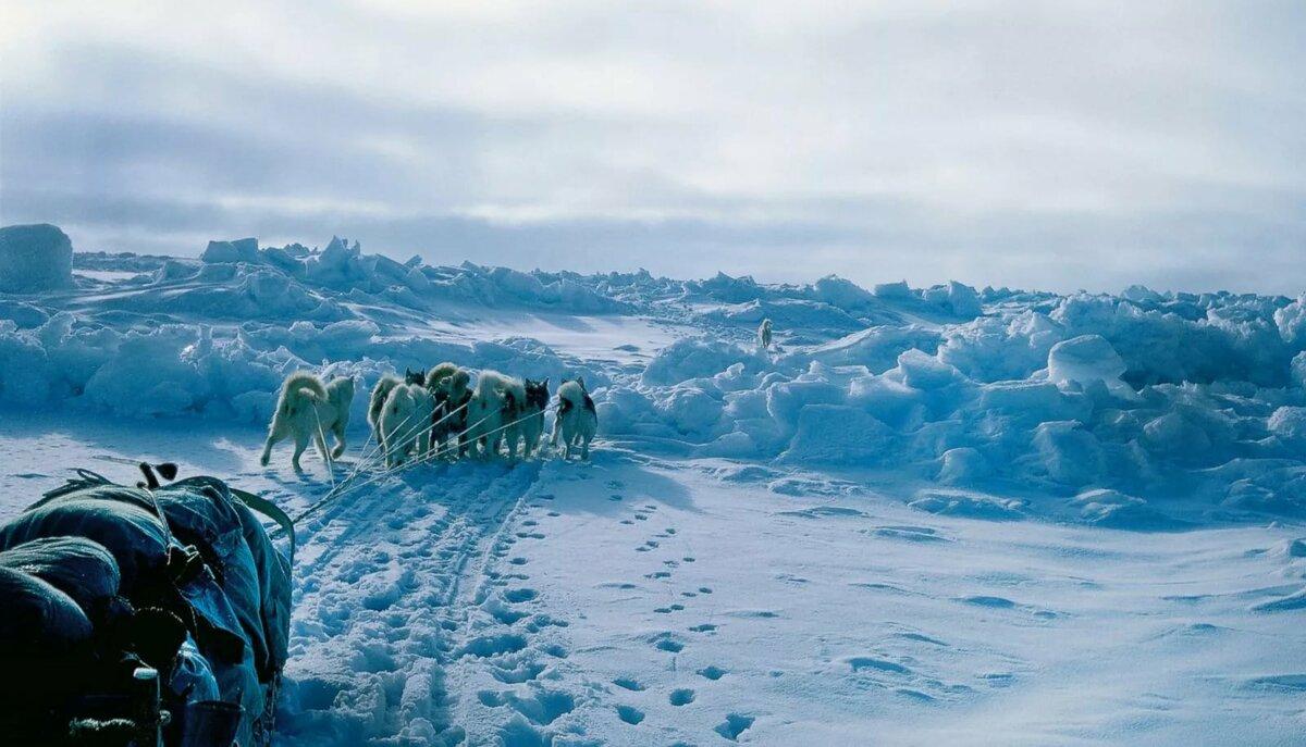 картины арктики фото награды учеников основная