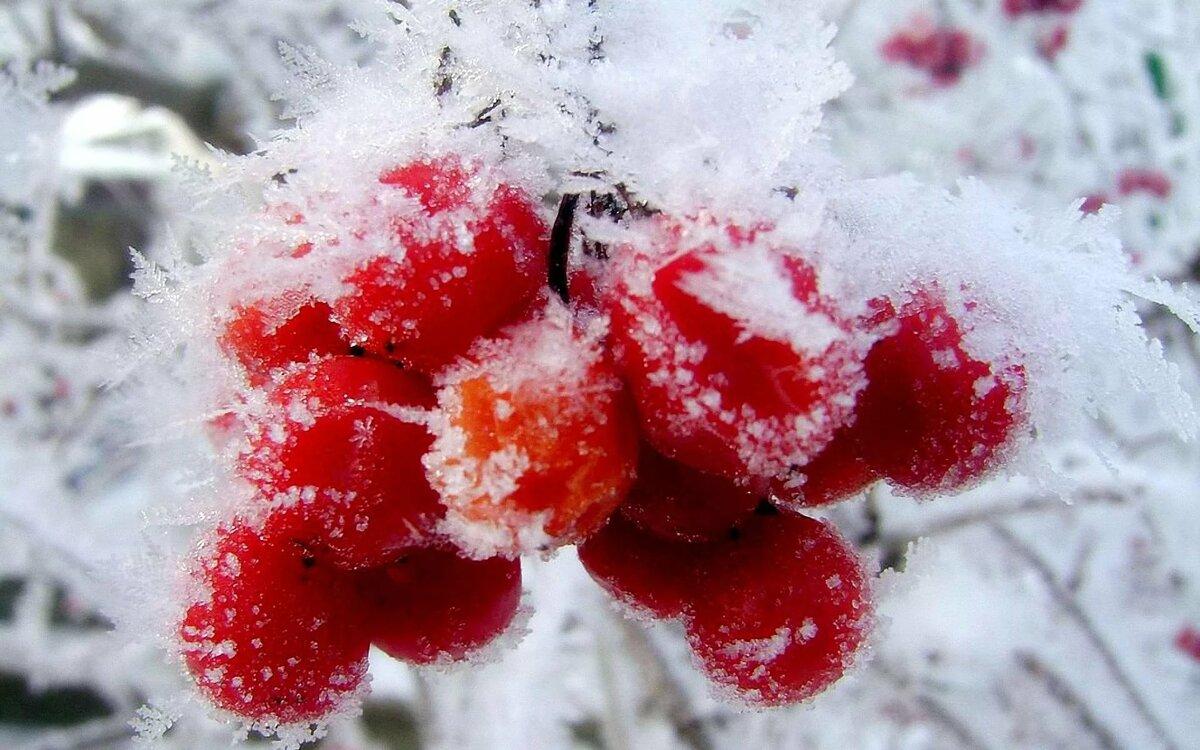 Первый снег картинки