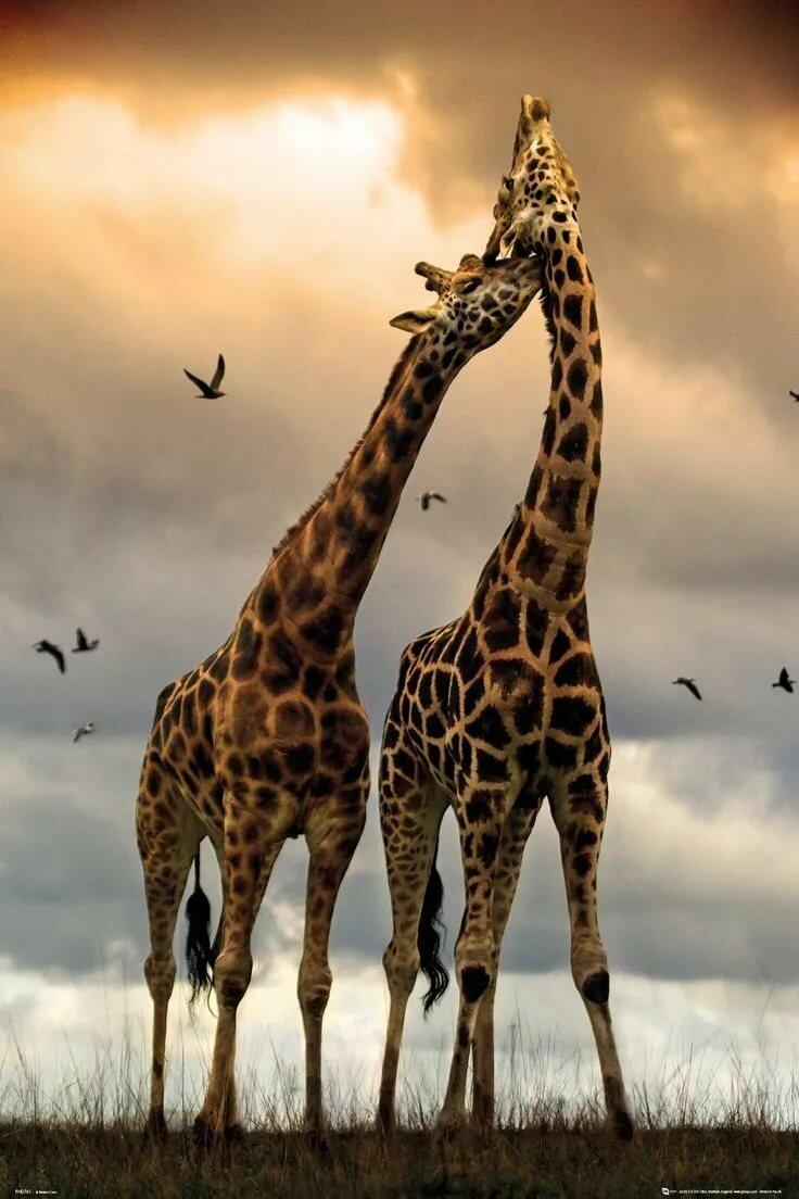 Картинки на телефон животными