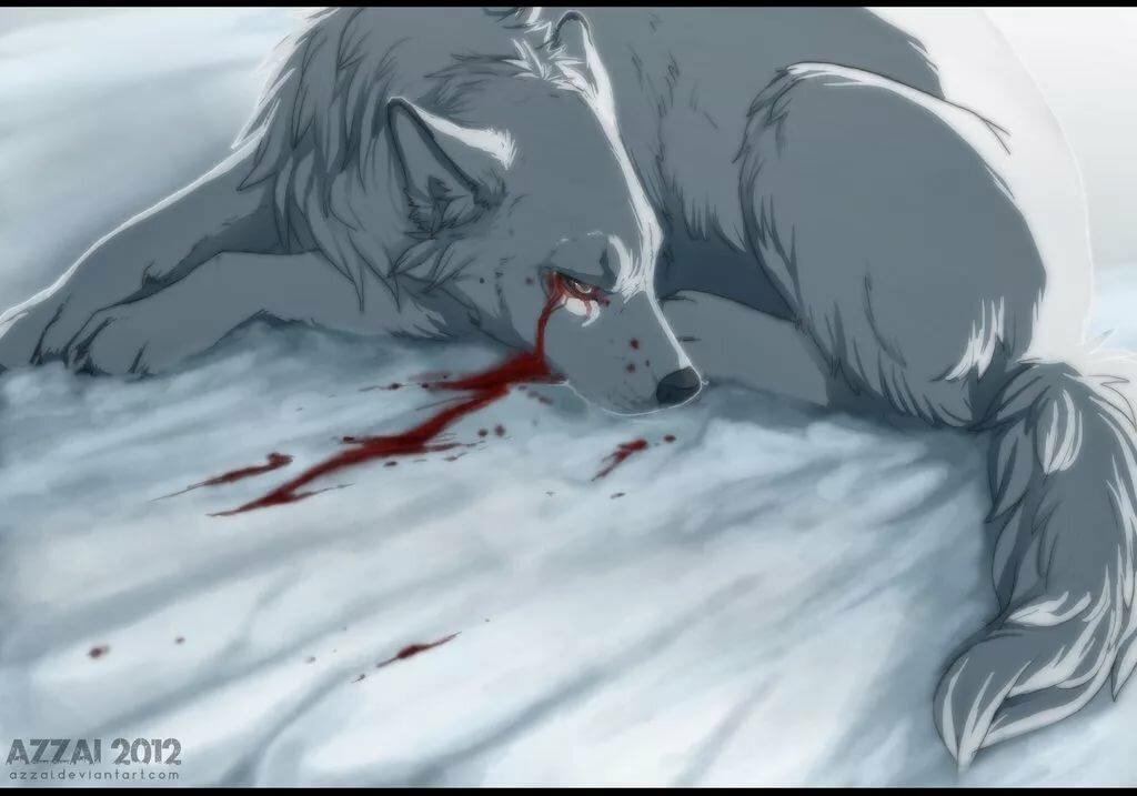 картинки раненых волков том, что