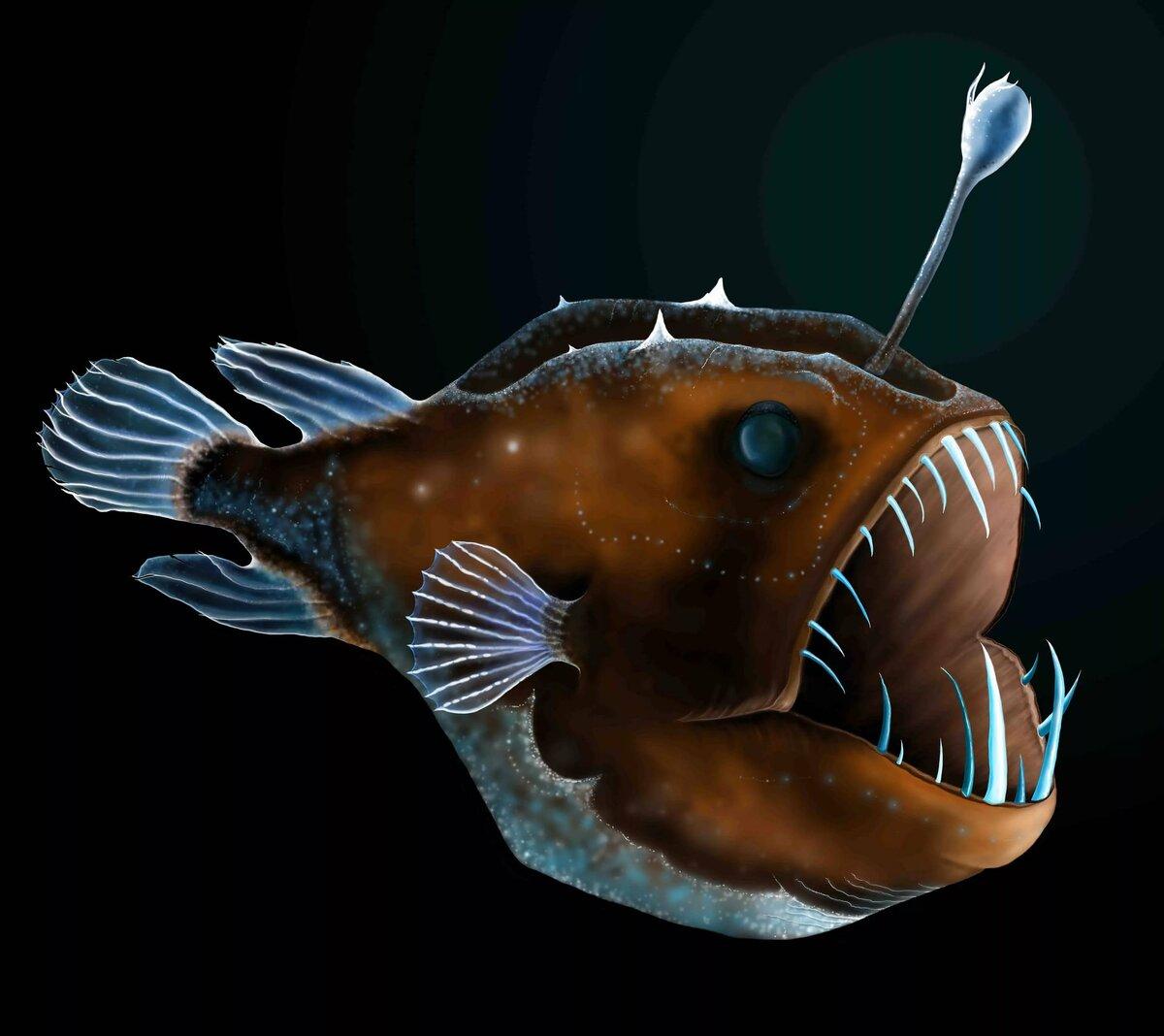 картинки рыба свет таким большим