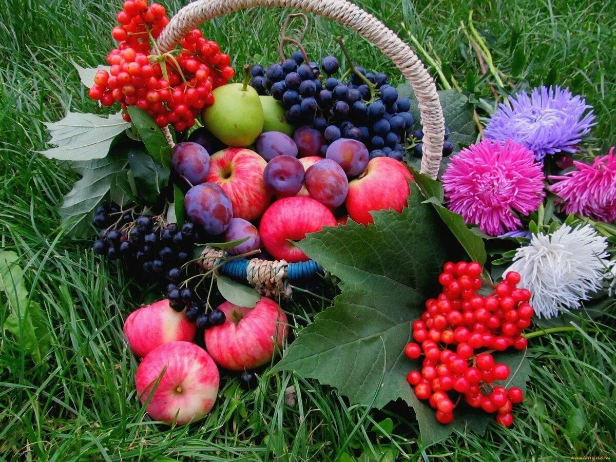 Август картинки природа красивые