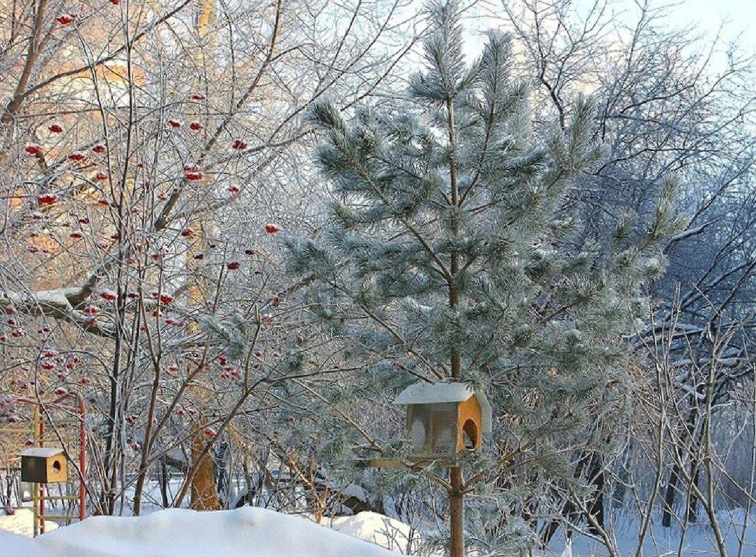 это снежный новосибирск фото более