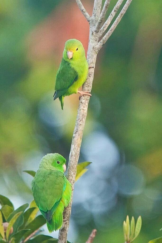 летом зеленые попугаи гифка монтеррей