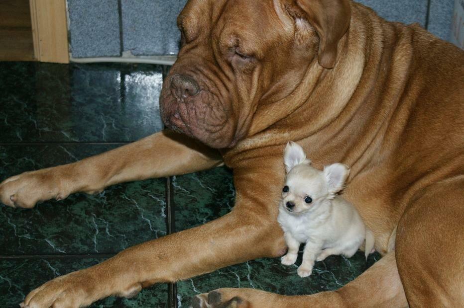 Собаки смешные фото с надписями