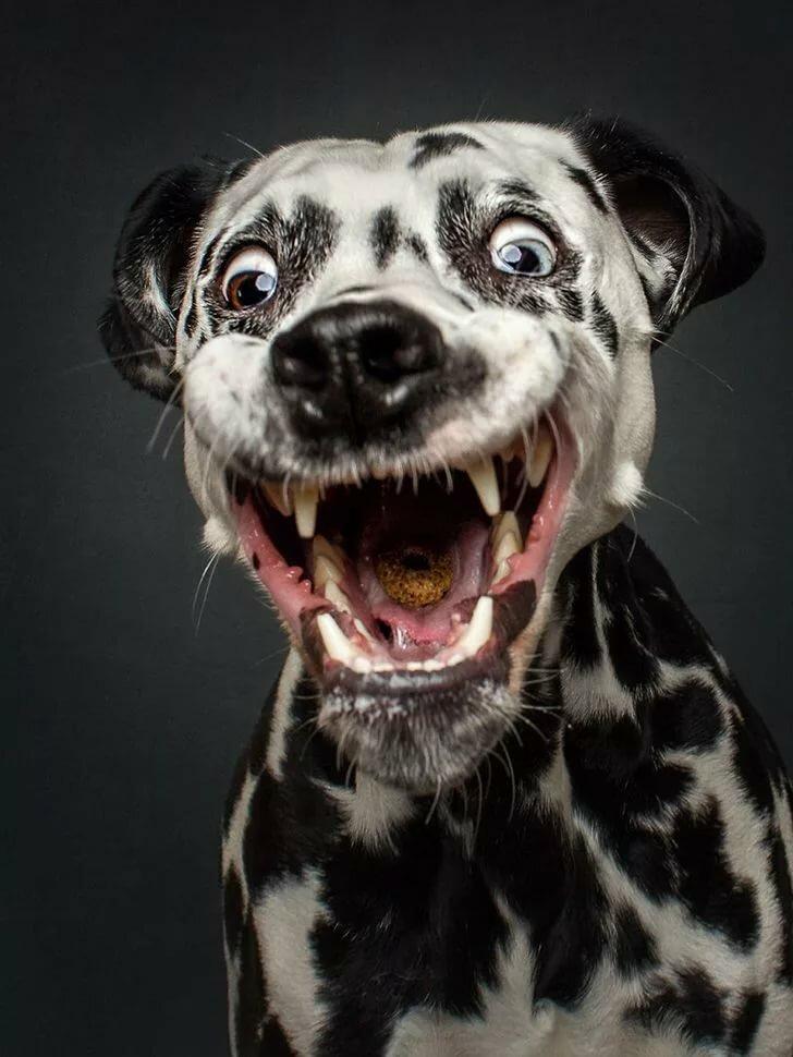фамилия смешная картинка пса всех