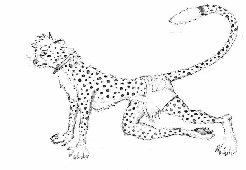 картинки гепарда как нарисовать покрасить так
