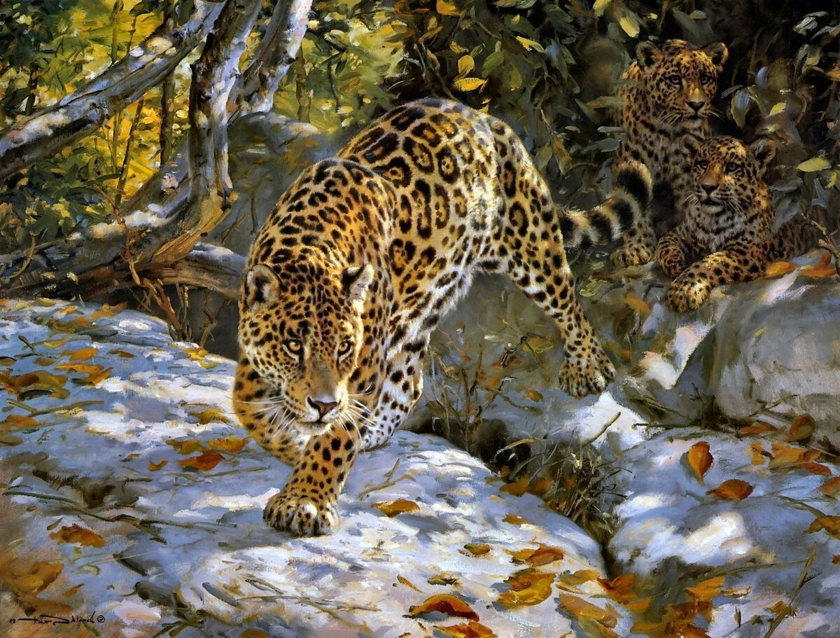 Картинки диким животными