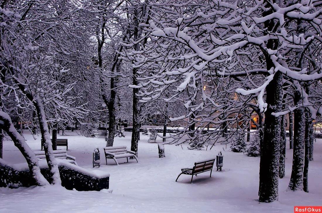 Картинка зимой в парке