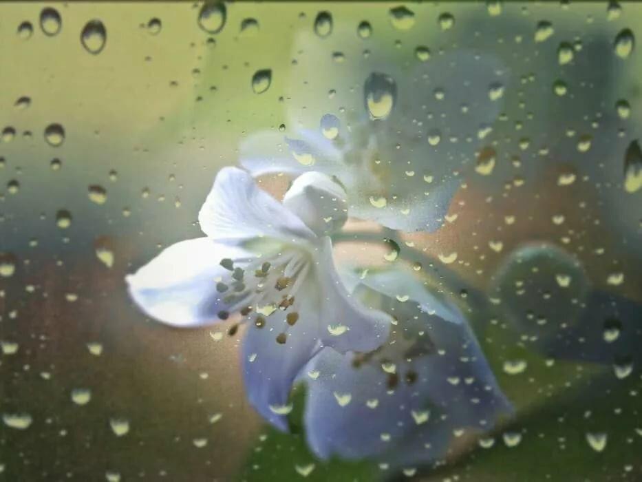 Стихи капли дождя на цветах картинки