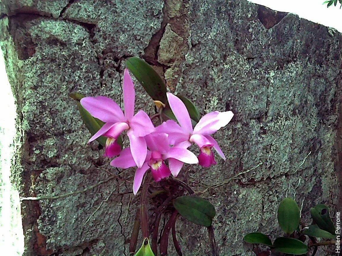 кого-нибудь орхидеи в дикой природе фото так, что