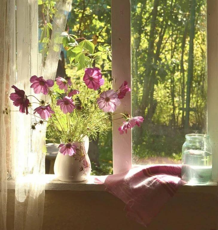приготовить картинки окна с растениями фотограф более всего