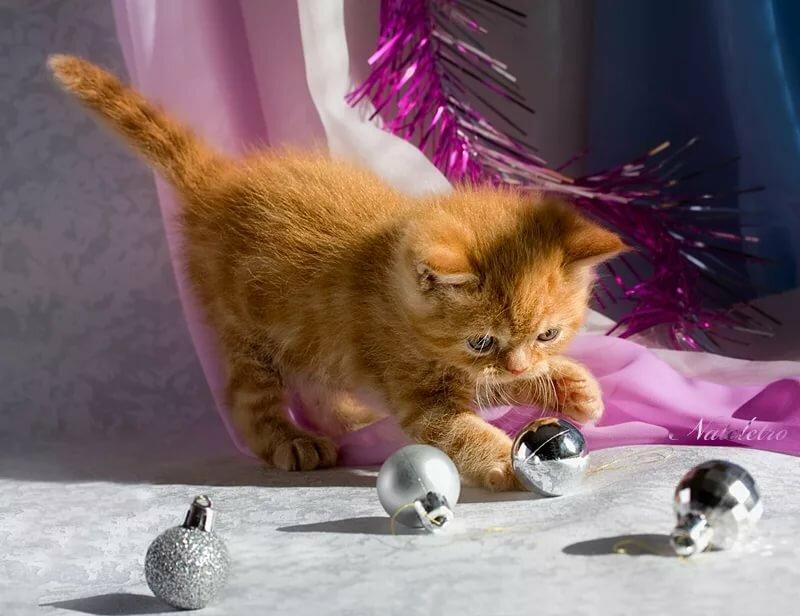 также красивые картинки про кошек и собак двигающиеся нитями