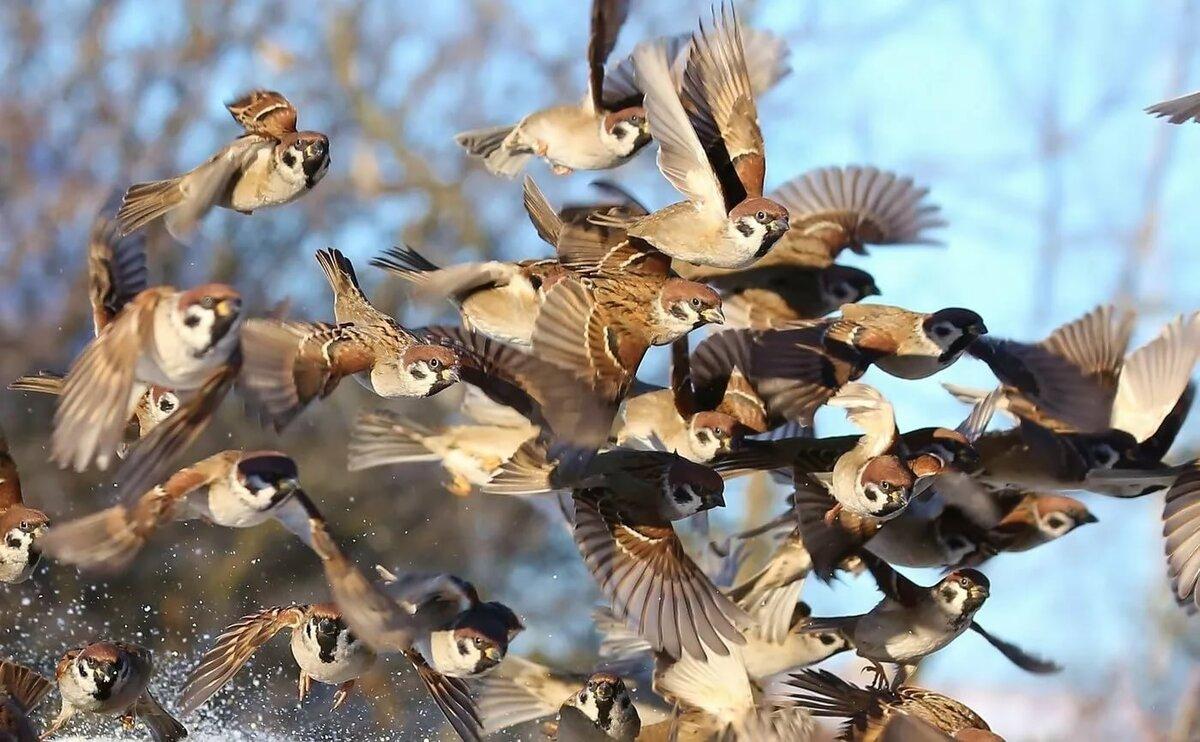 Перелетные птицы амурской области беседе артисты