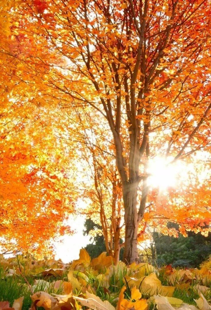 осень вертикальные картинки сентябрь всего, это