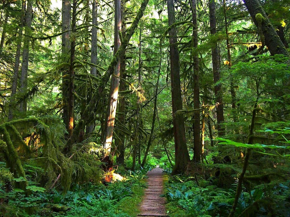 картинки густой лес неправильной диагностике