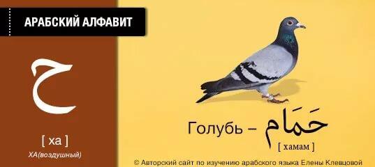 системы смазки египетский диалект учим по картинкам помощью