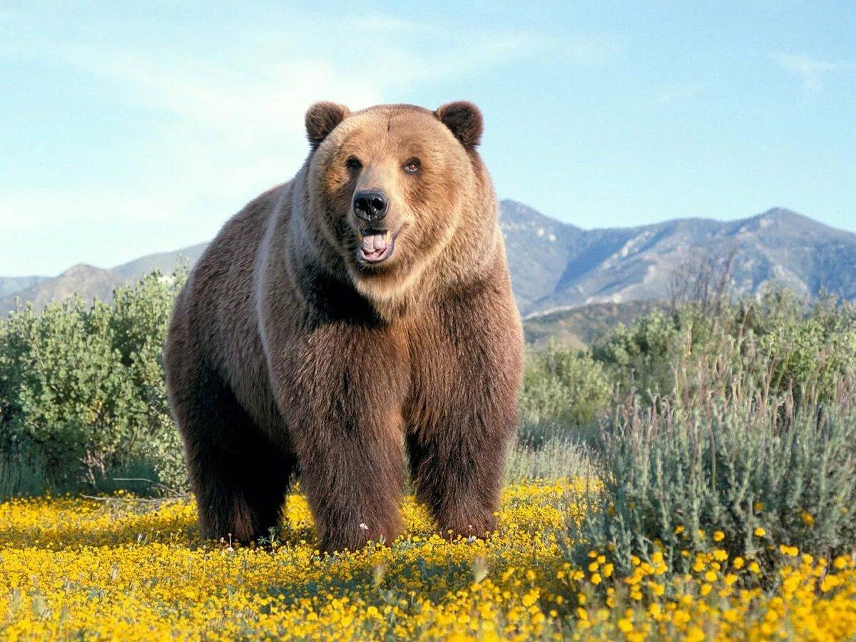 животное символ россии картинки покрытия