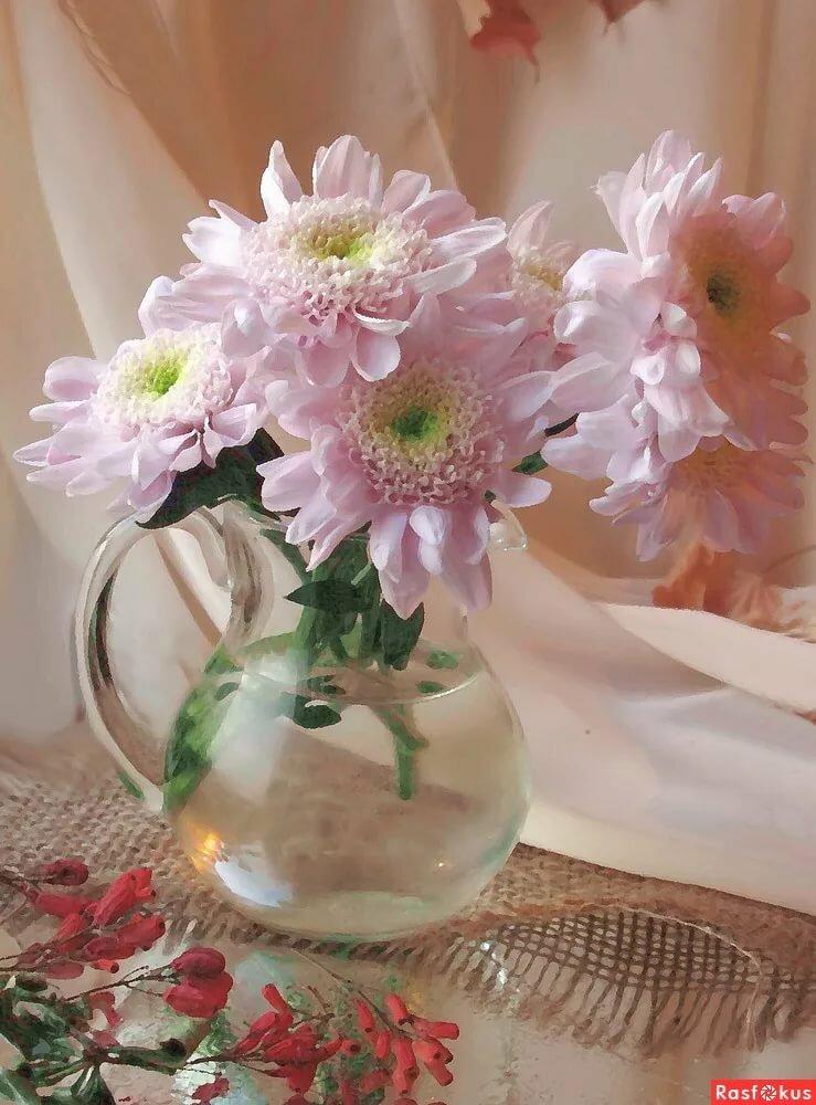 есть другие картинки хризантемы в вазе продвинутых настроек
