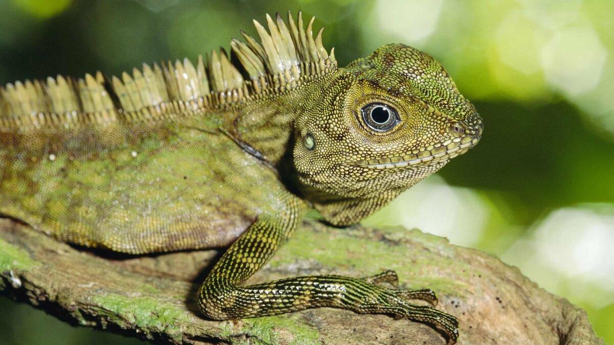 Тропические животные фото