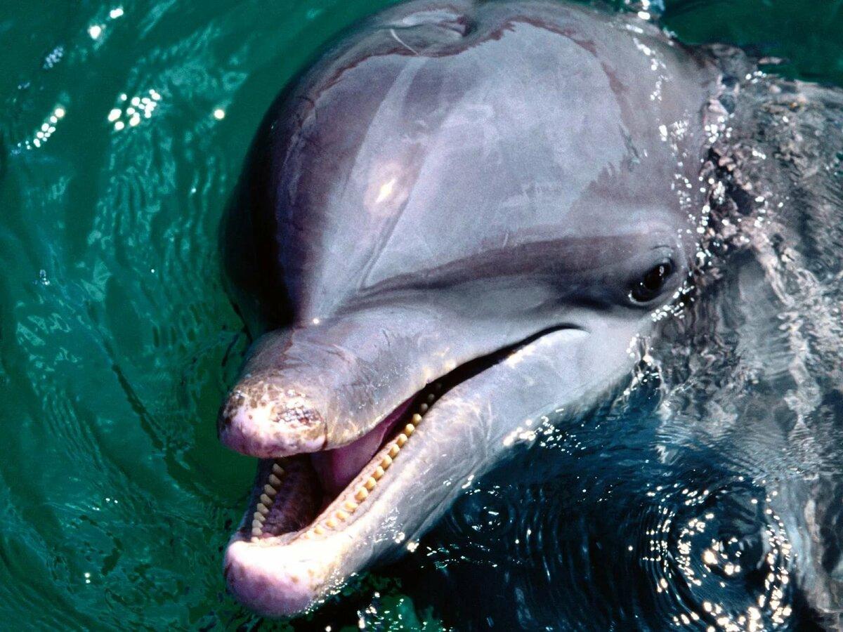 картинки морских жителей дельфины думаете