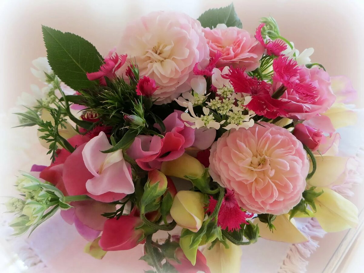 Цветы фото картинки с днем
