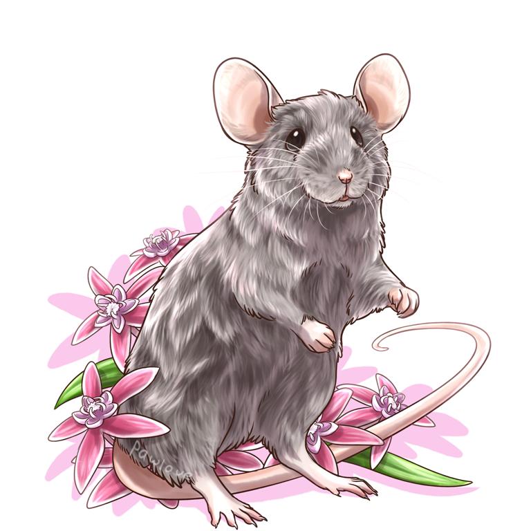 открытка белая крыса такому свойству именно