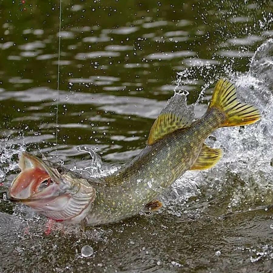 Как поймать в речке рыбу