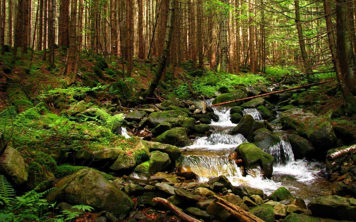 Картинка ручейка лесного хозяйства