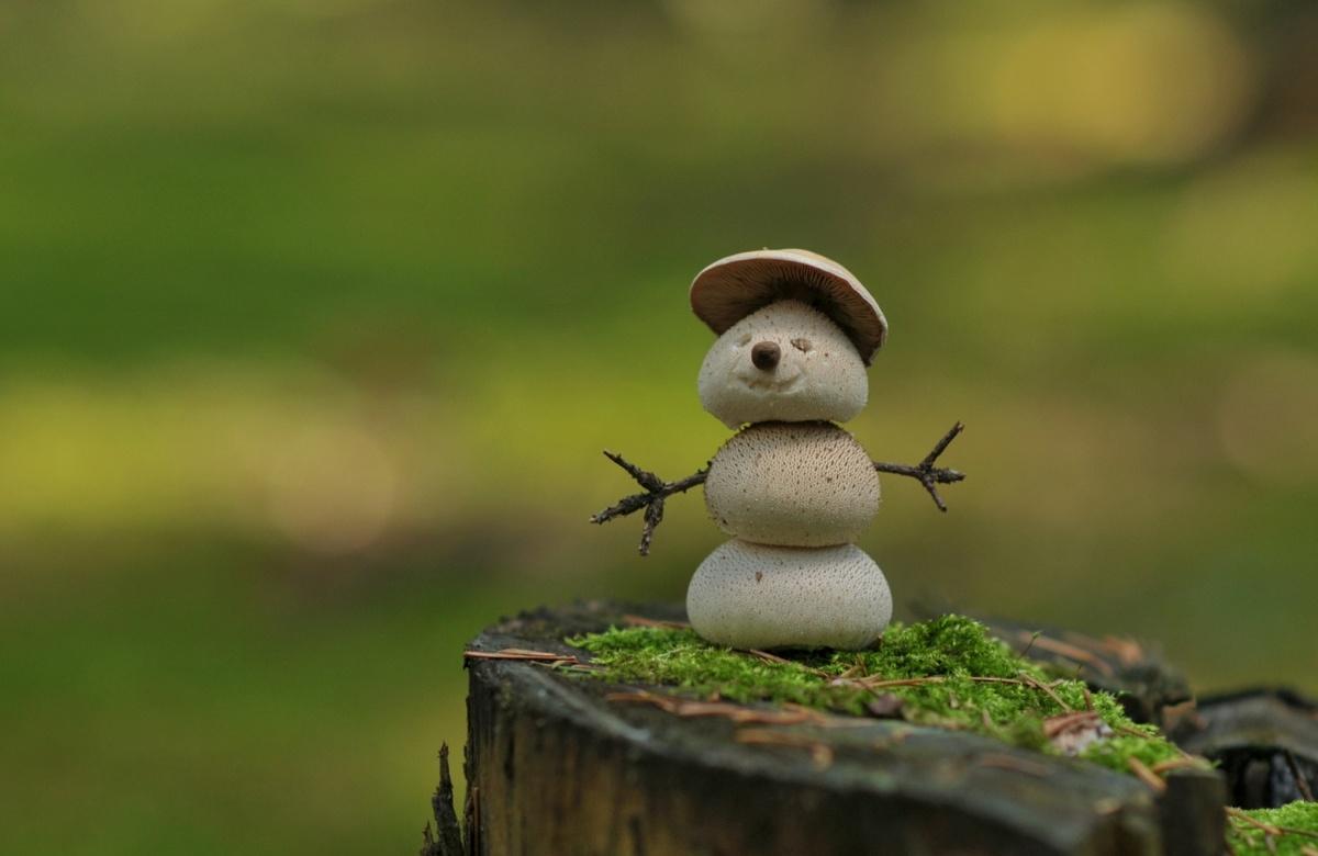 Картинки смешные снеговик летом