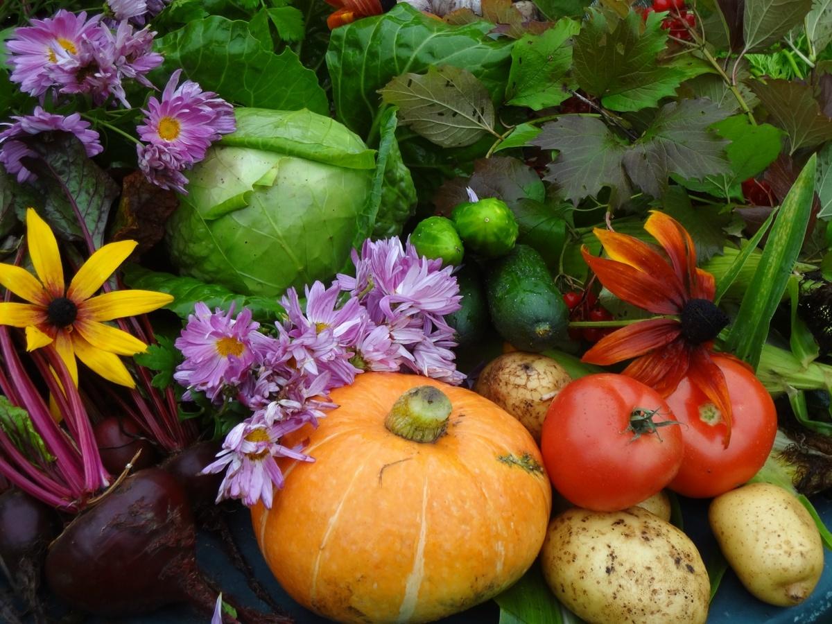 Картинки из овощей посмотреть