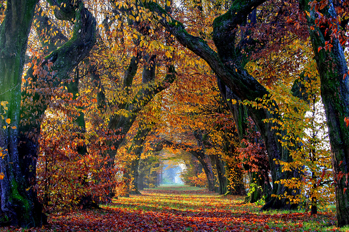 Картинки про осень из, картинки лукашенко картинки