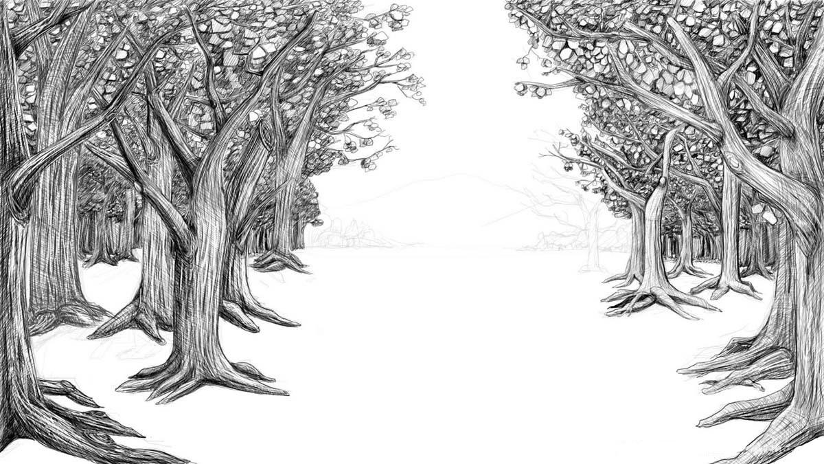 обычно картинки черный лес карандашом приложения