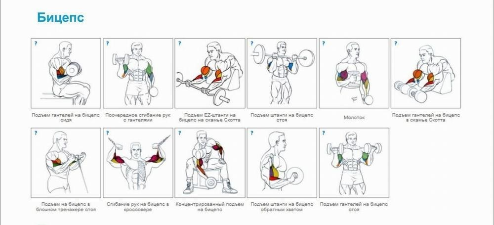 Тренировка на руки в тренажерном зале в картинках