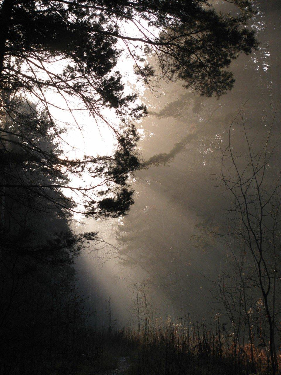 Осень. Утро.#лес #осень #туман #утро