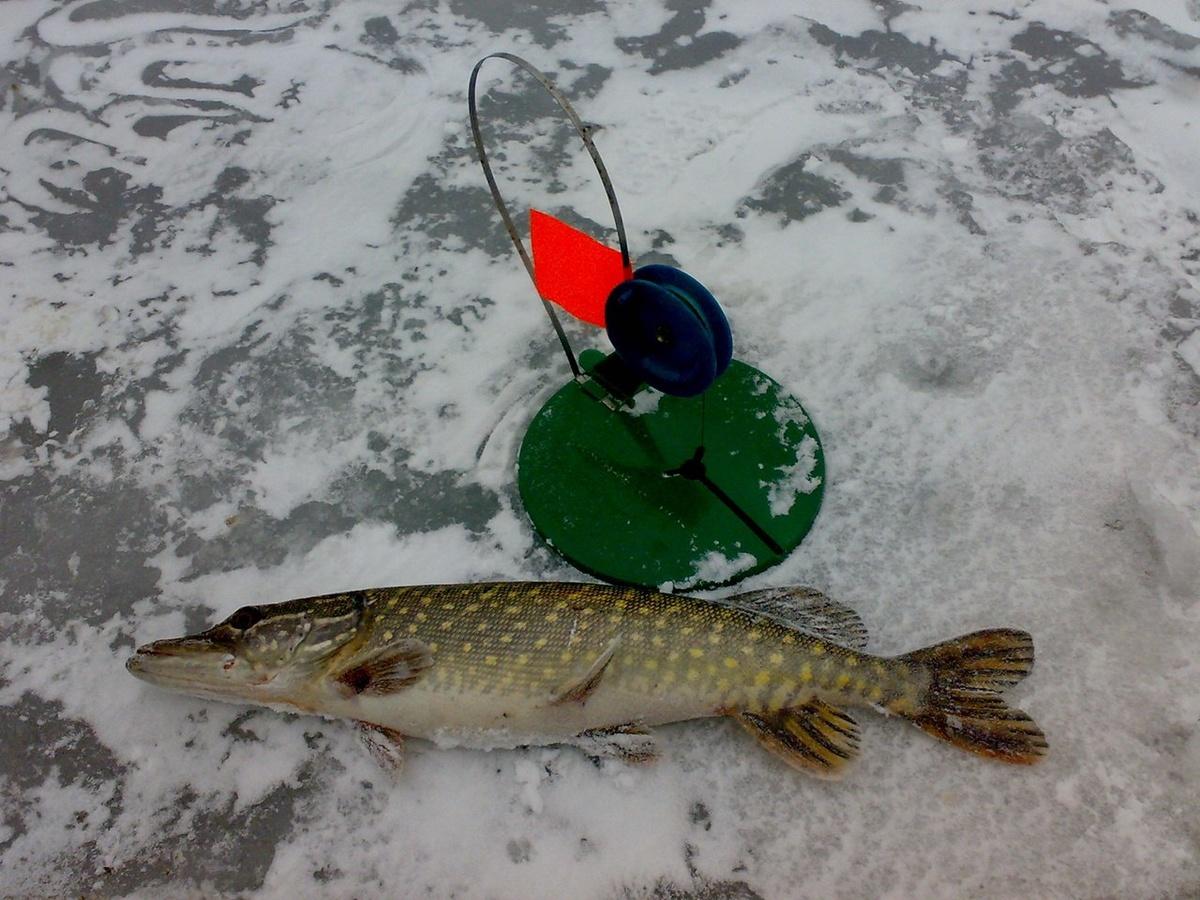 Смотреть видео Жерлицы. Зимняя рыбалка. Ловля щуки на жерлицы. на v4k.online бесплатно