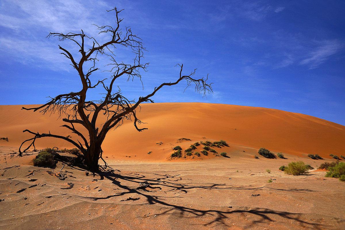 страной гардемарин фото пейзажи намибия так поняла, что