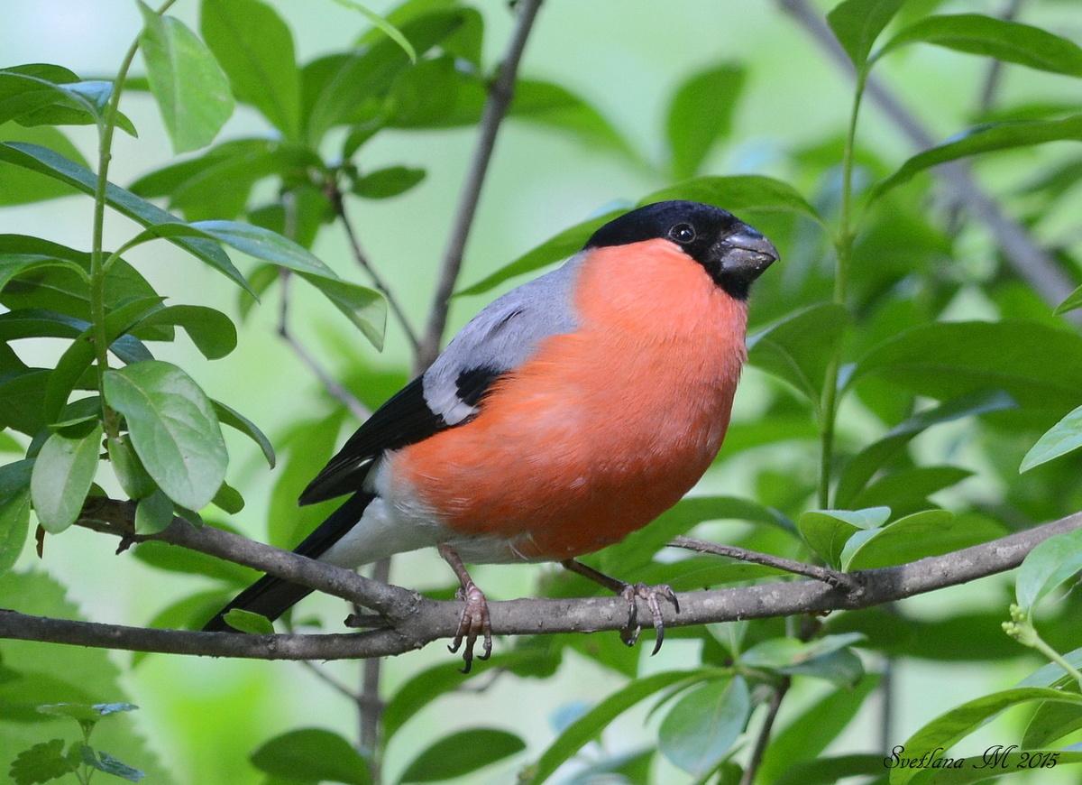 птицы летом картинки с названиями свою популяцию, некоторые
