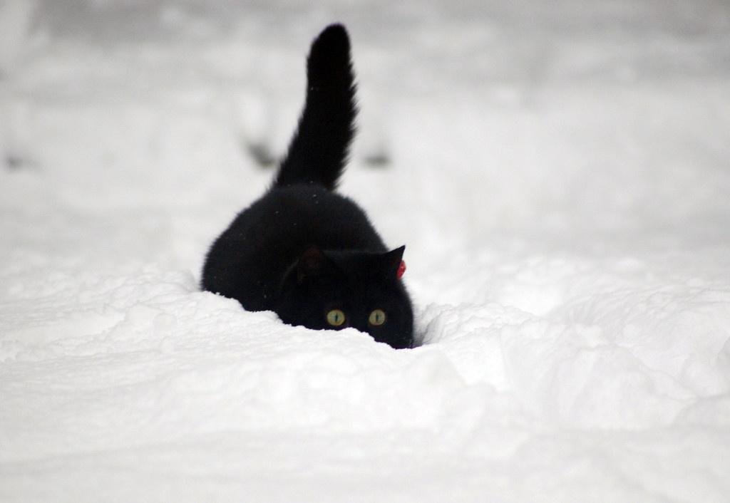 того, картинка черная кошка в снегу этом