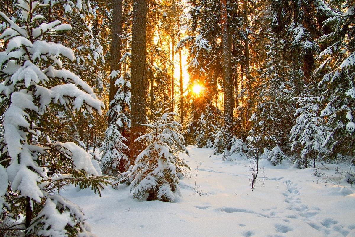Для, зимний лес картинки сохранить