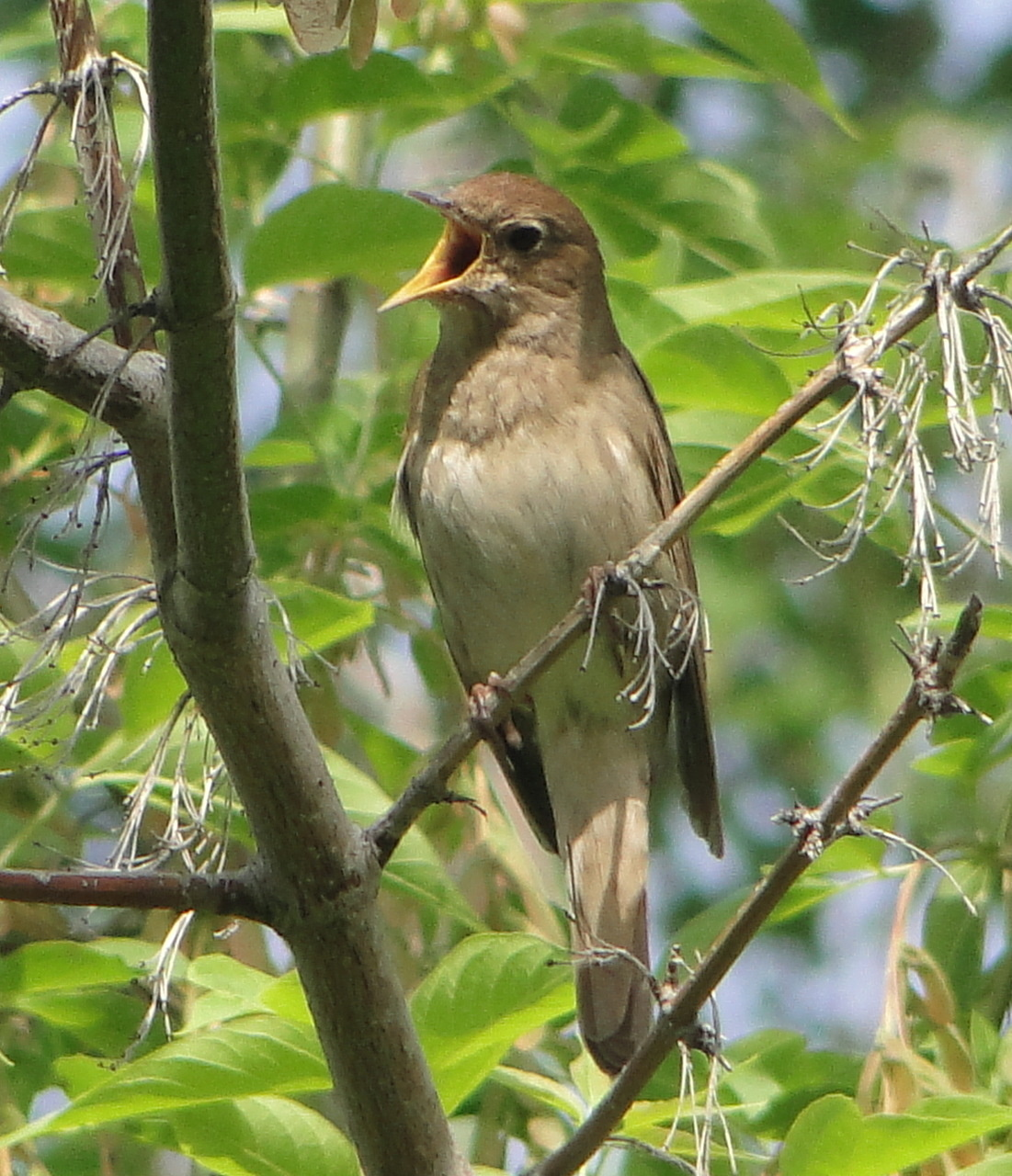 то, птицы урала летом фото и название бой уходит разведчик