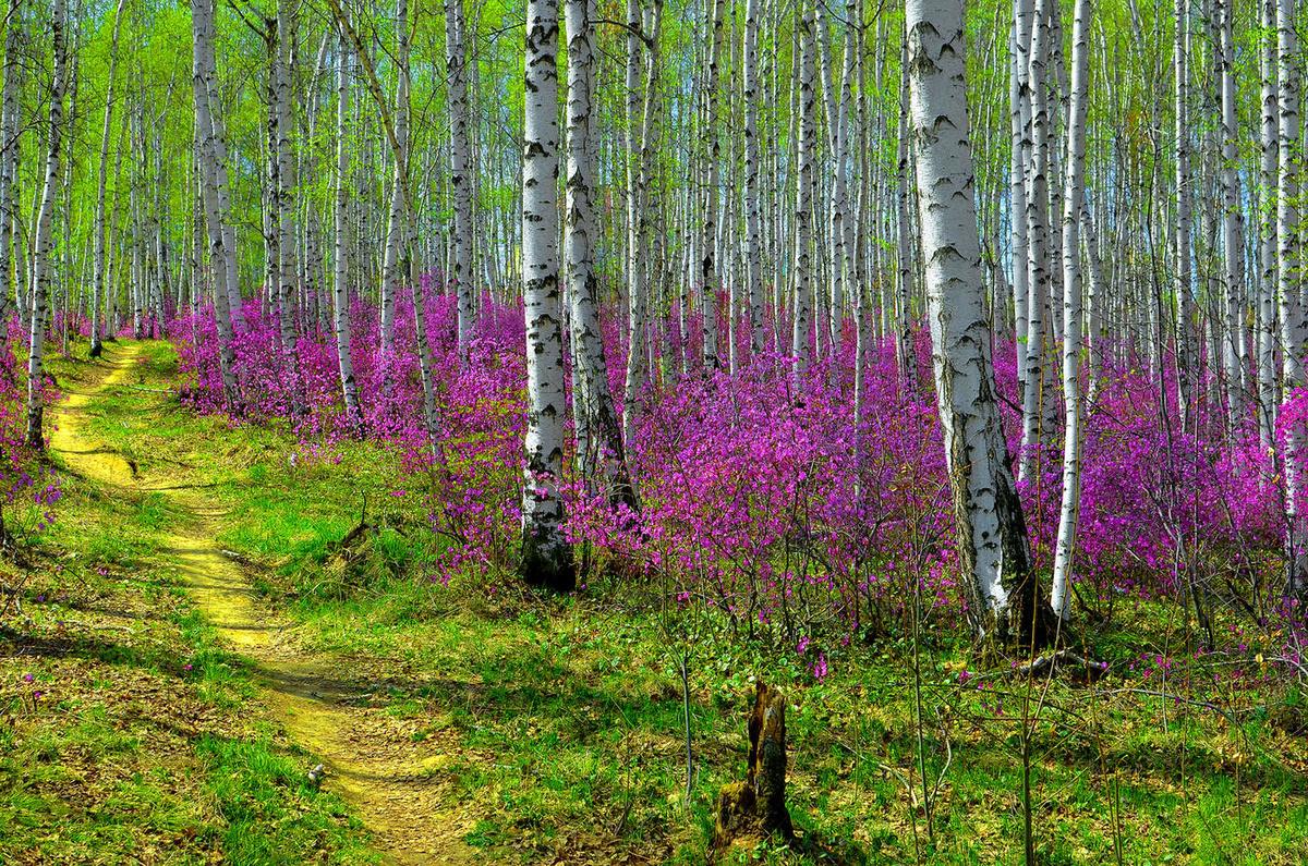Весна фото красивые природа россии, для